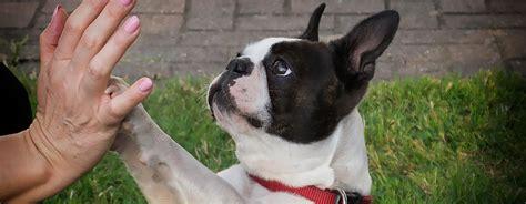 Hunde Arthrose Ernährung