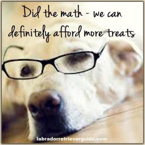 Labrador Meme - funny labrador dog memes view gallery of funny labrador memes labradorretrieverguide com