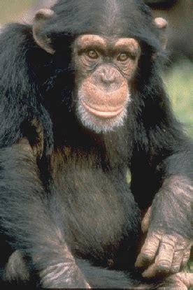 Diferencia entre el mono y el hombre Proyecto Origen Vida