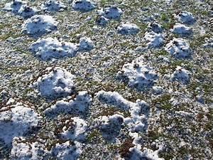 Halten Maulwürfe Winterschlaf : halten maulw rfe eigentlich winterschlaf springe ~ Lizthompson.info Haus und Dekorationen