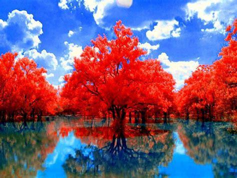 los lugares mas bellos lindos arboles rojos sobre agua