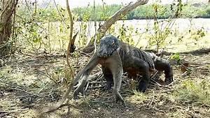 Komodo Dragon Eating a Whole Monkey - SevereHD.com WE ...