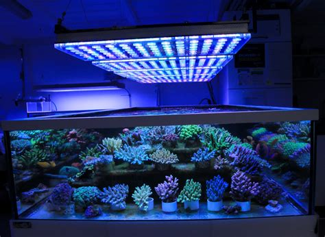 led fish tank lights german displays beautiful coral atlantik v4 led