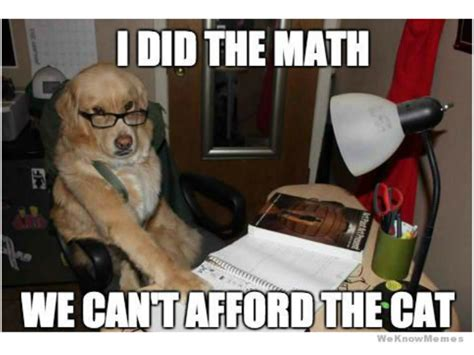 Accountant Dog Meme - funniest ever memes for dog owners