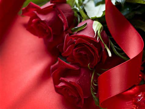 Rose Wallpapers Downlod