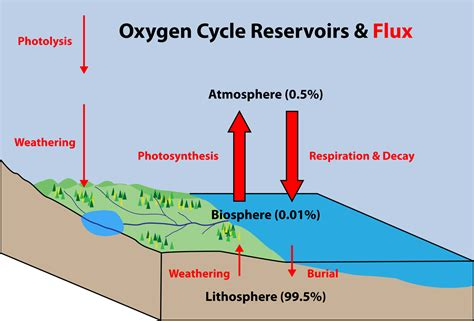 oxygen cycle meaning steps diagram chemistry byjus