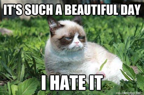 Nature Meme - grumpy cat hates nature memes quickmeme