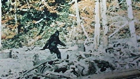 bigfoot sighting    turn    believer