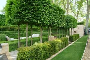 Privacy Hedge Landscape Design