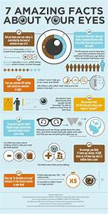 7 Amazing Facts About Your Eyes | Vision Therapy ...