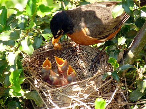 the early bird catches the worm jonus group the jonus