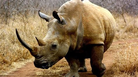 Black Rhino Protection