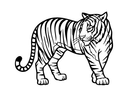 Coloring Harimau by Zoo Animals Coloring Pages Coloringsuite