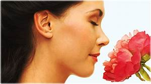 Sense Of Smell Quiz  How It Works  Body Odor  Perfume  And