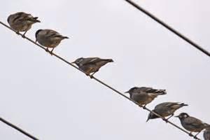 多 古町 鳥 インフルエンザ