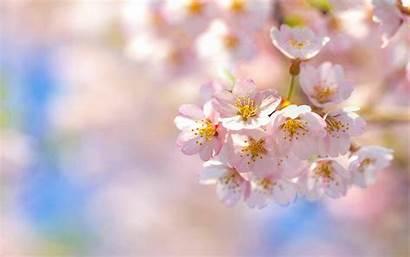 Pastel Spring Backgrounds Kwiaty Haul Flower Yves