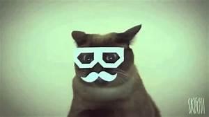 Dubstep Cat Extended YouTube