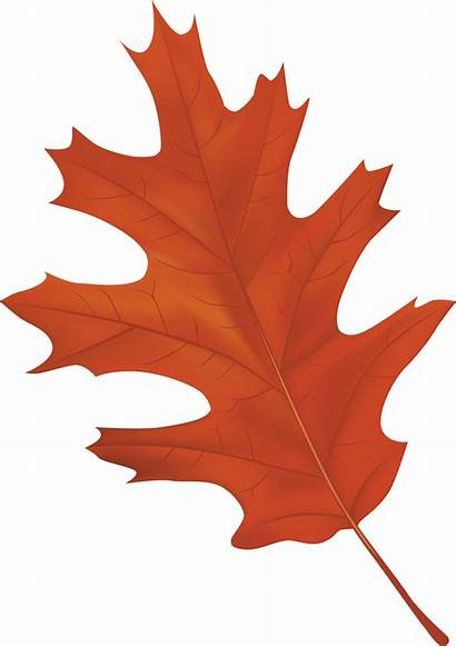 Clipart Transparent Leaf Autumn Leaves Fall Clip