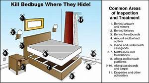effective bed bug prevention in london bugs pinterest With bed bug safety