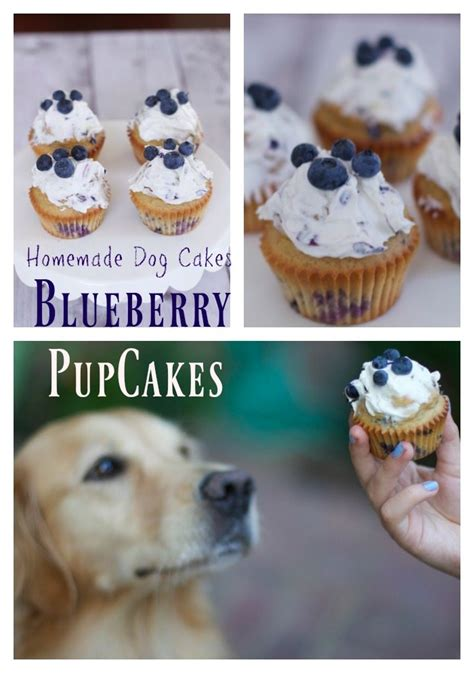 simple homemade dog cake recipe blueberry pupcakes