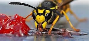 Se Débarrasser Des Guepes : comment distinguer une gu pe d 39 une abeille ~ Melissatoandfro.com Idées de Décoration