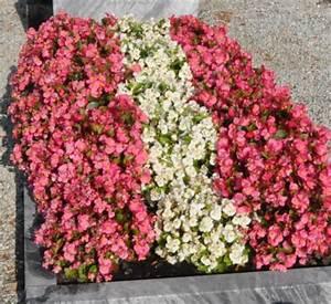 Blumen Im Sommer : grabbepflanzung sommer 036 20120823 050 ~ Whattoseeinmadrid.com Haus und Dekorationen