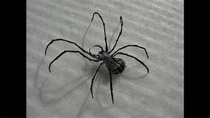 Kirittai Spider  U8718 U86db