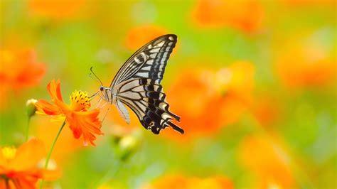 Butterfly On Flower Ultra Hd Wallpaper