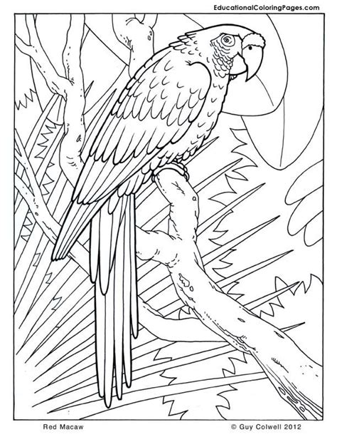 jungle animal coloring pages coloring home