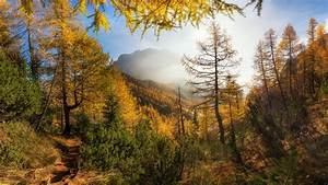 Wallpaper, Trees, Mountains, Sunshine, Autumn, 7680x4320, Uhd
