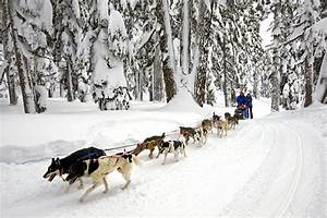 Dog sled at Alaska