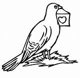 Pigeon Coloring Pages Printable Bird Colouring Bestcoloringpagesforkids Sheets Birds sketch template