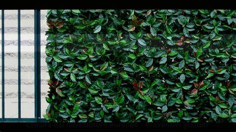 siepe per terrazzo siepe sempreverde finta artificiale vantaggi consigli ed