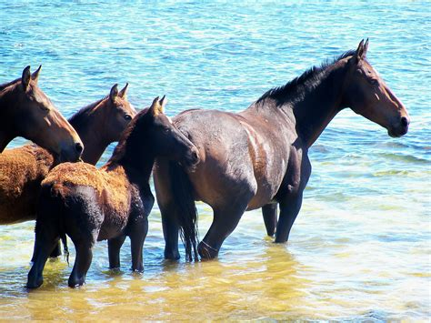 wild africa horses south hermanus water lagoon animals horse places bot uploaded river cape town
