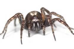 Spinnen Fernhalten Wohnung : spinne im abfluss ungeziefer loswerden ~ Whattoseeinmadrid.com Haus und Dekorationen