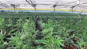 Vermont Senate passes bill to legalize recreational ...