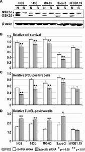 Effect of RNA interference on the expression of GSK-3β ...