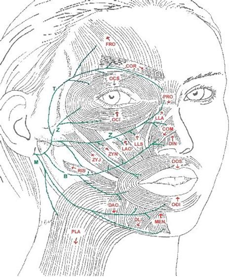 Facial Exercises For Bells Palsy - Full Real Porn