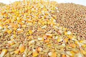 Free Images   Plant  Barley  Wheat  Dish  Produce  Crop