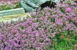Pflanzen Für Trockene Schattige Standorte : 76 besten bodendecker bilder auf pinterest pflanzen f r ~ Michelbontemps.com Haus und Dekorationen