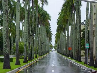 Palm Trees Tree Types Street Australia Dallas