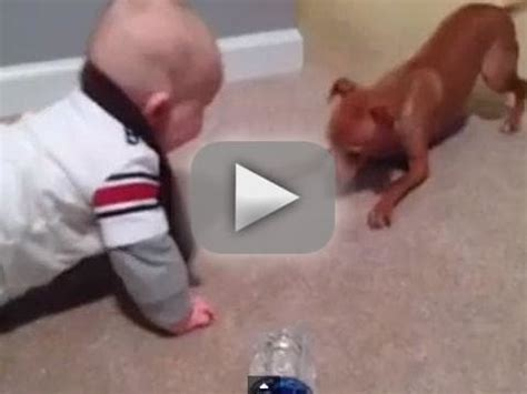 baby stares  puppy  adorable viral video