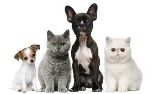 dogs and cats thrive pet foods