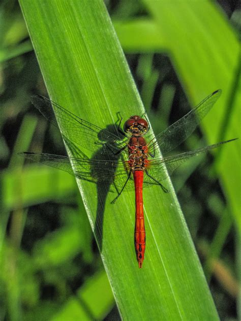 stock photo  close dragonfly wing insect