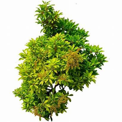 Bush Plants Cutout Transparent Nature Clipart Bushes