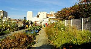 Un Jardin Sur Le Toit : le jardin sur le toit rue des haies paris 20e un ~ Preciouscoupons.com Idées de Décoration