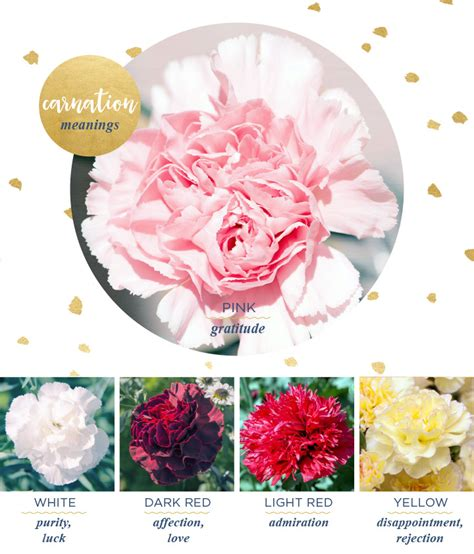 carnation meaning and symbolism ftd