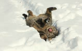 snow cats cat snow winter mood wallpaper 2048x1280 125279