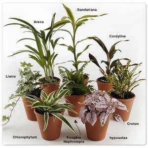 Plante D Intérieur Pas Cher : les plantes en pot d 39 int rieur pas vraiment d polluantes ~ Premium-room.com Idées de Décoration