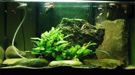 fond ecran vid 233 o aquarium 1 heure